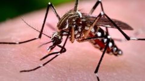 ¿Qué es la fiebre por virus Zika?
